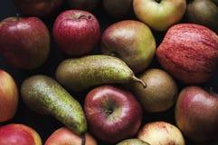 Autumn Fruits arkivfoton