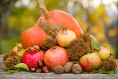 Autumn Fruits Imagen de archivo libre de regalías