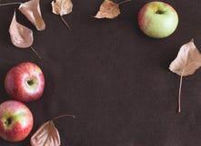 Autumn Fruits Imagenes de archivo