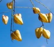 Autumn fruits against sky. Autumn fruits against blue sky Stock Image