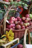 Autumn fruits Stock Photography