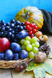 Autumn fruits assortment with grapes, plums, apples and walnuts Stock Photos