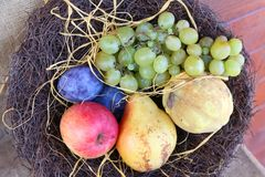 Autumn fruits. Grapes, plum, apple, pear and quince decorated in a basket royalty free stock images
