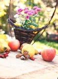 Autumn fruits - autumn harvest Royalty Free Stock Photo