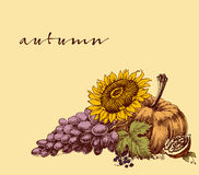 Autumn fruits background Stock Photos