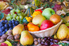 Autumn fruits in basket and colorful leaves Stock Photos
