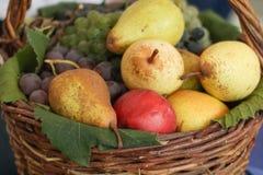 Autumn fruits basket Royalty Free Stock Image
