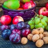Autumn fruits Stock Image