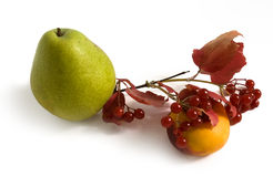 Autumn fruits and berries Stock Images