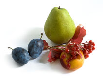 Autumn fruits and berries royalty free stock image