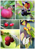 Autumn fruits and berries. Photo composition Stock Photo