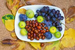 Autumn fruits  and berries on a white plate grapes, figs, plums, jyjybe Royalty Free Stock Photography