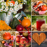 Autumn fruits collage Stock Images