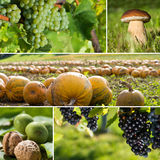 Autumn fruits collage Royalty Free Stock Photography