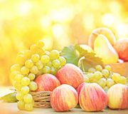 Autumn fruits  Stock Photo