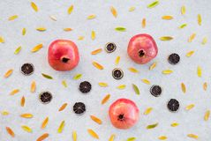 Autumn fruits and colorful ashberry tree leaves royalty free stock image