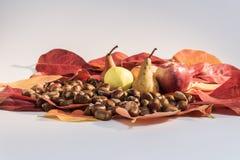 Autumn fruits Royalty Free Stock Photos