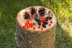 Autumn fruits of forest on wooden stump in garden Royalty Free Stock Image