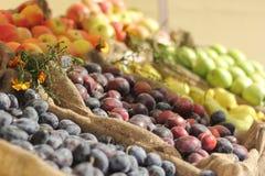 Autumn fruits Stock Photos
