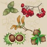 Autumn Fruits (Gemakkelijke Editable-Geplaatste Vector) Royalty-vrije Stock Afbeelding