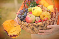 Autumn fruits in hands of woman Royalty Free Stock Photography