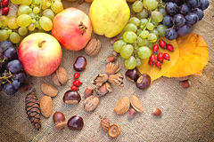 Autumn fruits Healthy food Royalty Free Stock Image