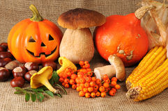 Autumn fruits like pumpkin, mushroom and chestnuts Royalty Free Stock Photo