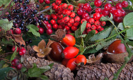Autumn fruits and nuts Stock Photos