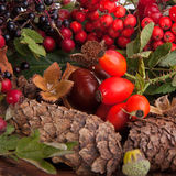 Autumnal fruits and nuts Stock Images