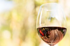 Autumn fruits and nuts reflection on glass of wine Stock Photography