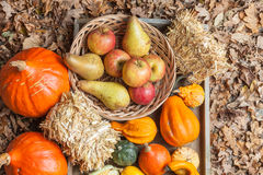 Autumn fruits. Pumpkins, apples, pears, tomatos and straw on a wooden plate Royalty Free Stock Images