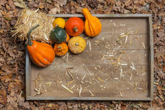 Autumn fruits. Pumpkins, apples, pears, tomatos and straw on a wooden plate Stock Image