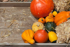 Autumn fruits. Pumpkins, apples, pears, tomatos and straw on a wooden plate Stock Images