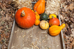 Autumn fruits. Pumpkins, apples, pears, tomatos and straw on a wooden plate Royalty Free Stock Image