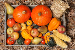 Autumn fruits. Pumpkins, apples, pears, tomatos and straw on a wooden plate Royalty Free Stock Photo