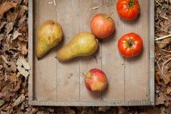 Autumn fruits Stock Images