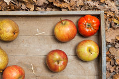 Autumn fruits. Pumpkins, apples, pears, tomatos and straw on a wooden plate Stock Photos