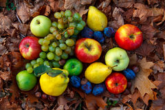 Autumn fruits. Are rich in vitamins and healthy Stock Image