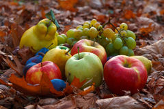 Autumn fruits. Are rich in vitamins and healthy Royalty Free Stock Images