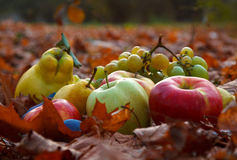 Autumn fruits Stock Photos
