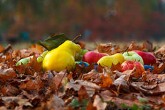 Autumn fruits. Are rich in vitamins and healthy Stock Photos