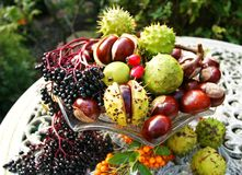 Autumn Fruits of The Season. The Harvest of a Most enjoyable walk in the rolling Hill of Northumberland, England during October stock photos