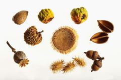 Autumn fruits and seeds. Almond, acorns and autumn seeds and pods on white background Royalty Free Stock Photo
