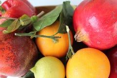 Autumn fruits of Sicily -  Close up - Italy Royalty Free Stock Photos