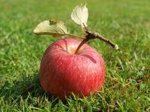 Autumn fruits, southern Bohemia. Czech Republic Royalty Free Stock Image