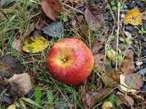 Autumn fruits, southern Bohemia Stock Photography