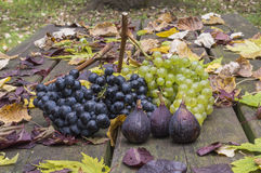 Autumn fruits on a table. Autumn fruits: grapes and figs on a wooden table and autumn leaves Royalty Free Stock Photo