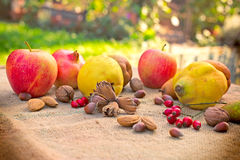 Autumn fruits on table Stock Photography