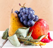 Autumn fruits Stock Photography