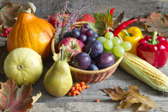 Autumn fruits and vegetables abstract still life. Concept Stock Photos